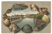 Fort Monroe, Virginia Postcard:  View Along the Moat Shell-Border