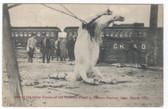 Dayton, Ohio Postcard:  Hung Horse Caused by 1913 Flood