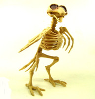 BIRD SKELETON Raven Crow Bones Halloween Decor Party Decoration Accessories bcg