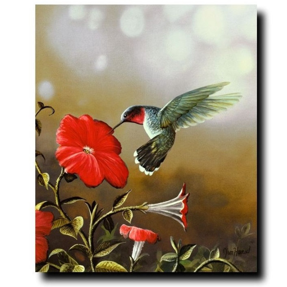 Ruby Throated Hummingbird Print   Jim Hansel   JHhummingbird