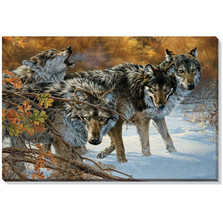 "Timber Wolf Canvas Wall Art ""Body Language"""