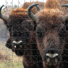 Bison Wooden Jigsaw Puzzle