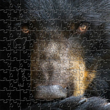 Black Bear Wooden Jigsaw Puzzle