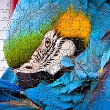 Blue Parrot Wooden Jigsaw Puzzle