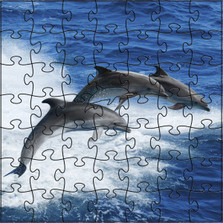 Dolphin Wooden Medium Jigsaw Puzzle