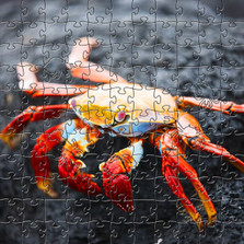 Red Rock Crab Wooden Medium Jigsaw Puzzle