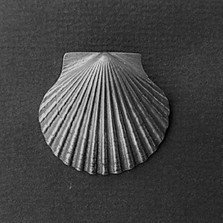 Scallop Shell Large Pewter Pin/Pendant   Nature Jewelry