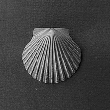 Scallop Shell Pewter Pendant   Nature Jewelry