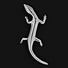 Gecko Pewter Pendant/Pin | Nature Jewelry