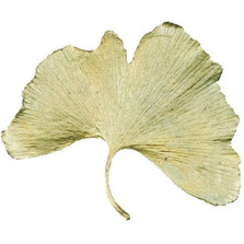 Gingko Large Pin | Nature Jewelry