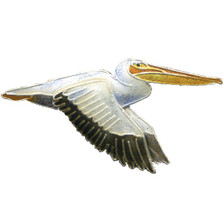 White Pelican Cloisonne Pin | Nature Jewelry