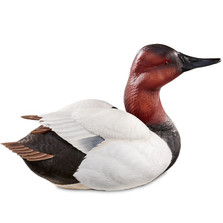 Alert Canvasback Duck Sculpture