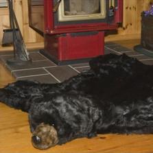 Black Bear Area Rug