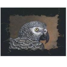 African Gray Portrait Print