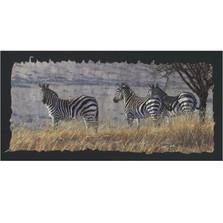 "Zebra Print ""Caught by African Light"""