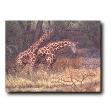"Giraffe Print ""Giraffes of Samburu"""