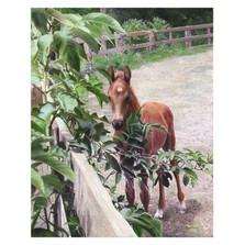 "Horse Print ""Kentucky Pride"""