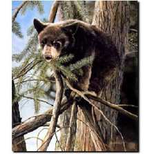 "Bear Print ""Out on a Limb"""