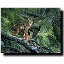 """Deer Print """"Awakening"""""""