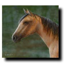 "Horse Print ""Buckskin"""