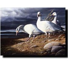 "Goose Print ""Snow Geese"""