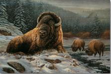 "Bison Wood Wall Art ""Spirit of the Wild"""