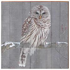 Barred Owl Wood Wall Art