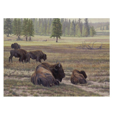 "Bison Print ""Rise and Shine"""