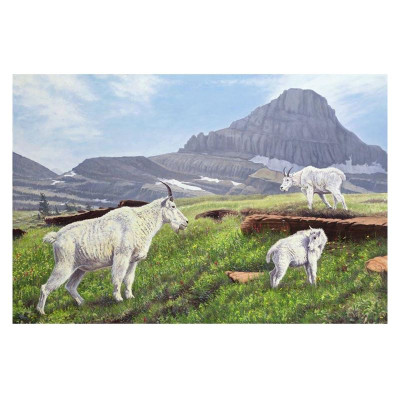 "Mountain Goat Print ""Summer in the High Country"""