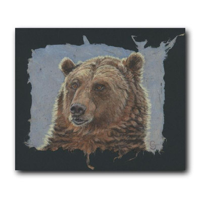 Grizzly Bear Portrait Print