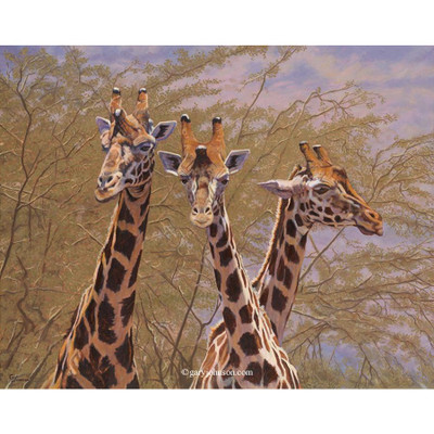 "Giraffe Print ""The Three Amigos"""