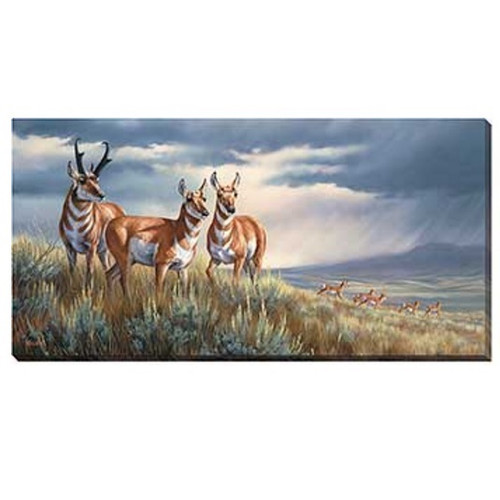 "Pronghorn Canvas Wall Art ""Approaching Storm"""
