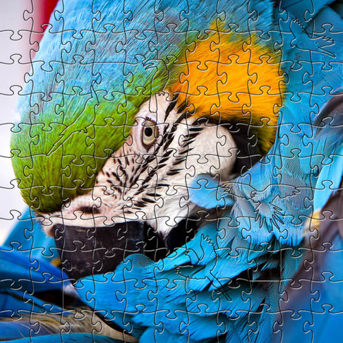 Blue Parrot Wooden Jigsaw Puzzle