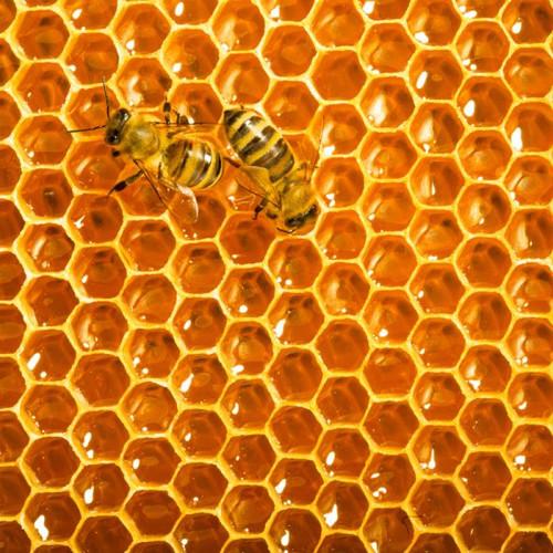 Honeybees Artisanal Wooden Jigsaw Puzzle | Zen Art & Design | ZADHONEYBEES
