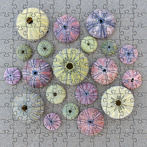 Sea Urchin Wooden Jigsaw Puzzle