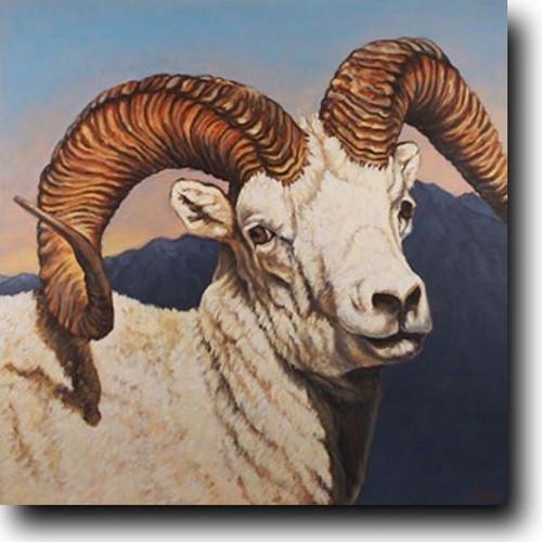 Dall's Sheep Print