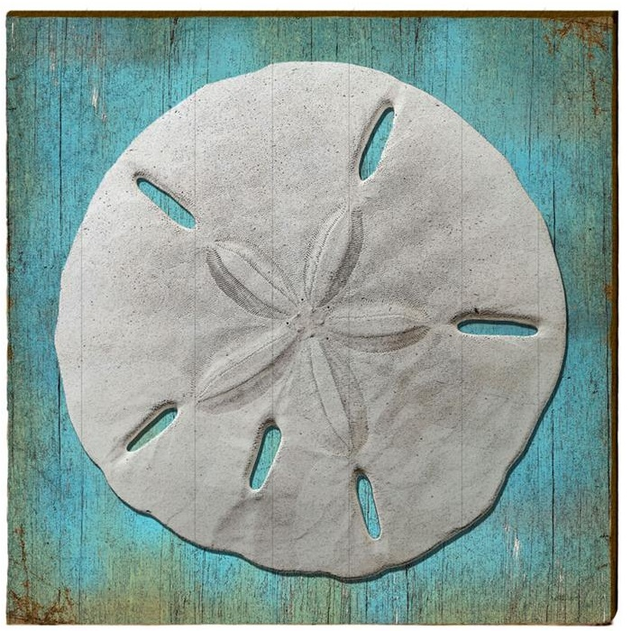 Custom 25 Sand Dollar Wall Art Decorating Inspiration Of Over Sized Sand Dollar Pottery Barn