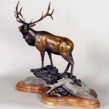 "Elk Bronze Sculpture ""Sir Royal"" | Scott Lennard | SLB02"