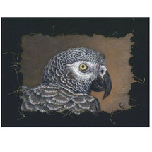 African Gray Portrait Print | Gary Johnson