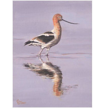 Avocet Print | Gary Johnson