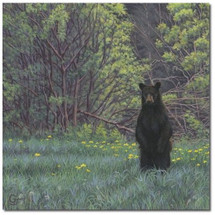 "Bear Print ""Picnic Patrol"" 