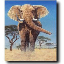"Elephant Print ""Stand Your Ground"" 