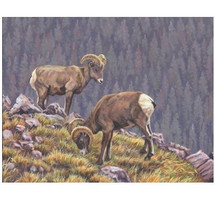 "Big Horn Sheep Print ""Tenants of the Tundra"" 
