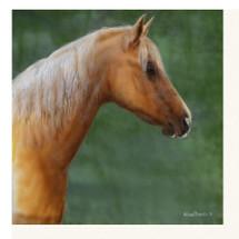 "Horse Print ""Palomino"" | Kevin Daniel"
