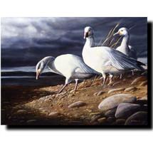 """Snow Geese"" Print | Kevin Daniel"