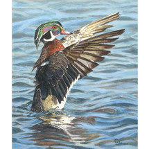 "Wood Duck Print ""Woodie"" 
