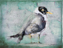 Hooded Gull Coastal Art