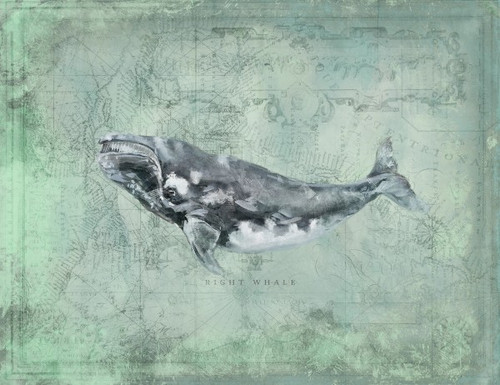 Right Whale by Anthony Morrow