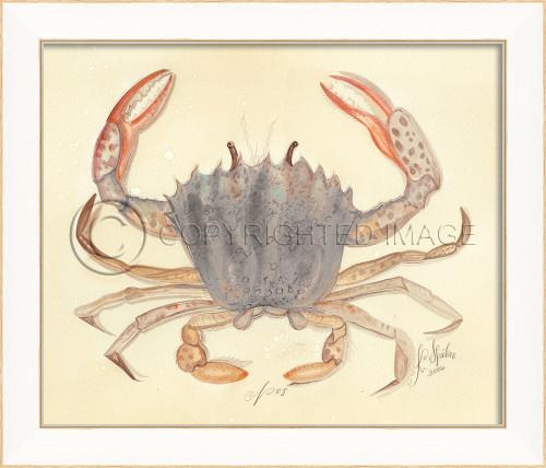 Spicher SS Crab No.8