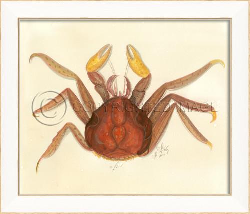 Spicher SS Crab No.7